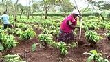 Video «Migros-Kaffeelieferant: Vorwurf von gewaltsamen Vertreibungen» abspielen
