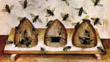 Mit dunklen Bienen auf Du und Du (Artikel enthält Video)