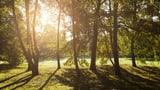Natur gegen Stress (Artikel enthält Video)