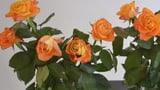 Video «Vom Blühen und Welken der Schnittblumen» abspielen