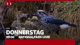 Ein Tag aus dem Schweizerischen Nationalpark  (Artikel enthält Bildergalerie)