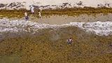 «Das Meer stirbt quasi an Multiorganversagen» (Artikel enthält Audio)