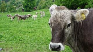 «Das sollte auf jedem Bauernhof eingeführt werden!»