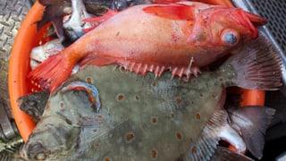Schonkur für Europas Fischbestände