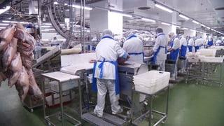 Arbeit macht krank: Fragwürdige Zustände im Migros-Fleischbetrieb