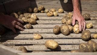 «Food Waste» – wenn aus Lebensmitteln Abfall wird