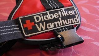 Video «Diabetiker-Warnhunde – Richtiger Riecher für den Blutzucker» abspielen