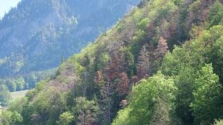 Wassermangel hat Bäumen zum Teil arg zugesetzt