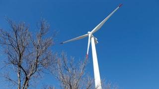 Windpark in der Melser Rheinau geplant