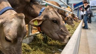 Emmi belohnt Bauern – wenn sie keine Milch bringen