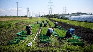 Avenir Suisse vul refurmar la politica agrara
