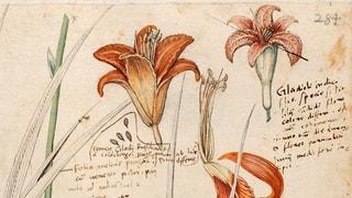 Universalgelehrter und Zeichner: Ein Zürcher Leonardo da Vinci