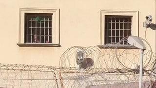 Die Auslieferung des Schweizer Flüchtlings aus Kroatien in die Türkei ist rechtlich problematisch, sagt ein Experte.
