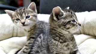 Für Katzen und Hunde werden keine Kosten gescheut
