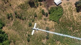 Monsanto zittert um Milliardengeschäft