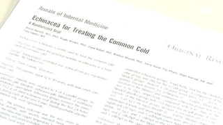 Echinacea – Wirkungslos bei Erkältung