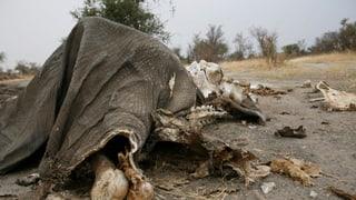 Illegaler Tierhandel – ein gut organisierter Krieg