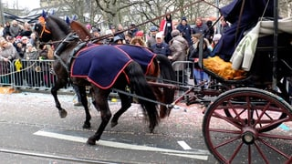 Nach Sturz an der Basler Fasnacht ist ein Pferd wieder wohlauf