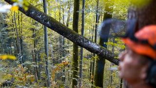 Aargauer Förster wollen mehr Geld für Waldbesitzer