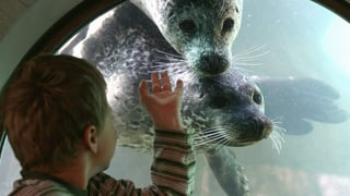 Seehunde im Zoo Zürich bräuchten mehr Platz