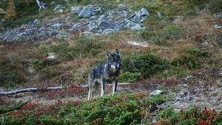 Uniuns d'ambient sa dostan cunter sajettar luf en il Valais