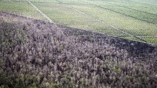 Der «Palmölvertrag» – eine besondere Herausforderung