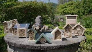 Bienenhotels im Test: Nur wenige sind artgerecht (Artikel enthält Video)