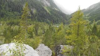 Der Bergsturz von Derborence schuf eine wilde Schönheit