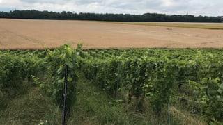 Die Natur macht den Wein