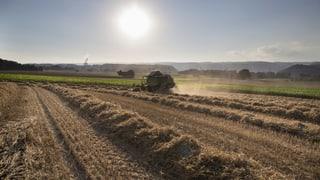 Bund will Glyphosat-Grenzwert um das Hundertfache erhöhen