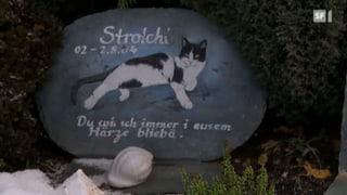Der teure Abschied vom Haustier (Artikel enthält Video)
