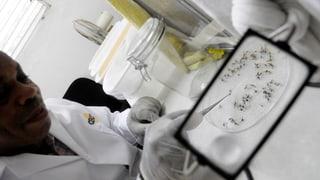 Dengue-Fieber ist in der Schweiz auf dem Vormarsch