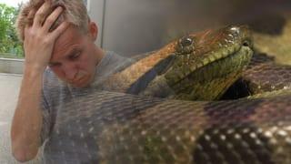 Reto Scherrer: «Jetzt habe ich ein Problem - die Riesenschlange»
