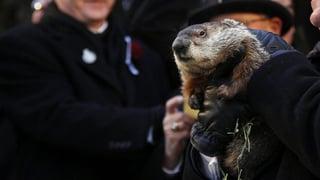Tierische Prognose: Murmeltier sagt Frühlingsbeginn voraus