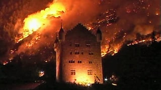 Zehn Jahre Waldbrand Leuk: Natur erholt sich langsam