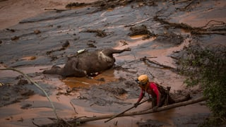 Öko-Katastrophe in Brasilien: Konzern-Vermögen eingefroren