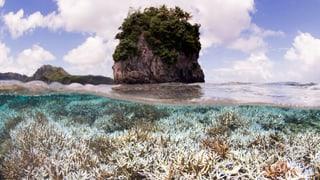 Korallenbleiche im Great Barrier Reef: So schlimm wie noch nie