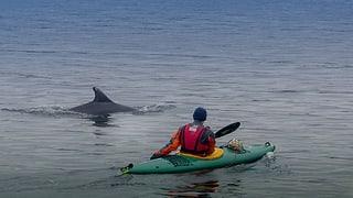 Selfie mit Delfie: Zwei Tümmler verzücken die Ostsee-Anwohner
