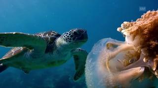 Im Innern einer Lederschildkröte