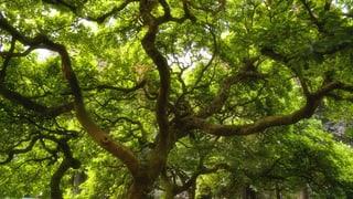 Die leise Symphonie der Bäume