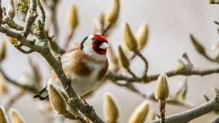 Quiz – wie gut kennen Sie unsere Gartenvögel?