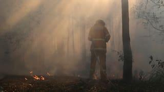 Australische Buschbrände: Alle zwei Jahre kommt's zur Katastrophe