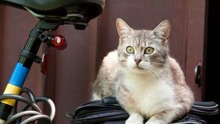 Unfall mit Katze: Wer zahlt den Schaden? (Artikel enthält Audio)