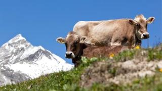 Bio-Fleisch für das gute Gewissen?
