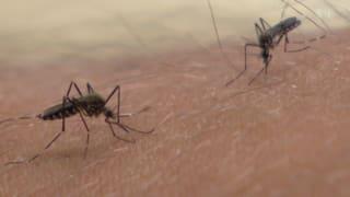 Moskitos riechen Malaria