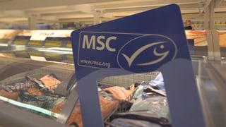 Trotz MSC-Label: Gefährdete Fische auf dem Teller