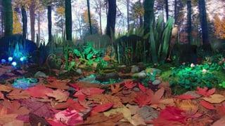 360-Grad-Videos – eine virtuelle Reise ins Unterholz