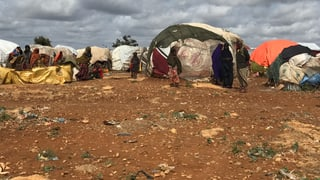 Im Würgegriff von Dürre und Terror