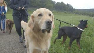 Video «Unterwegs mit einer Tiernanny» abspielen