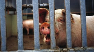 Neue Fachstelle für Tierschutz bewährt sich